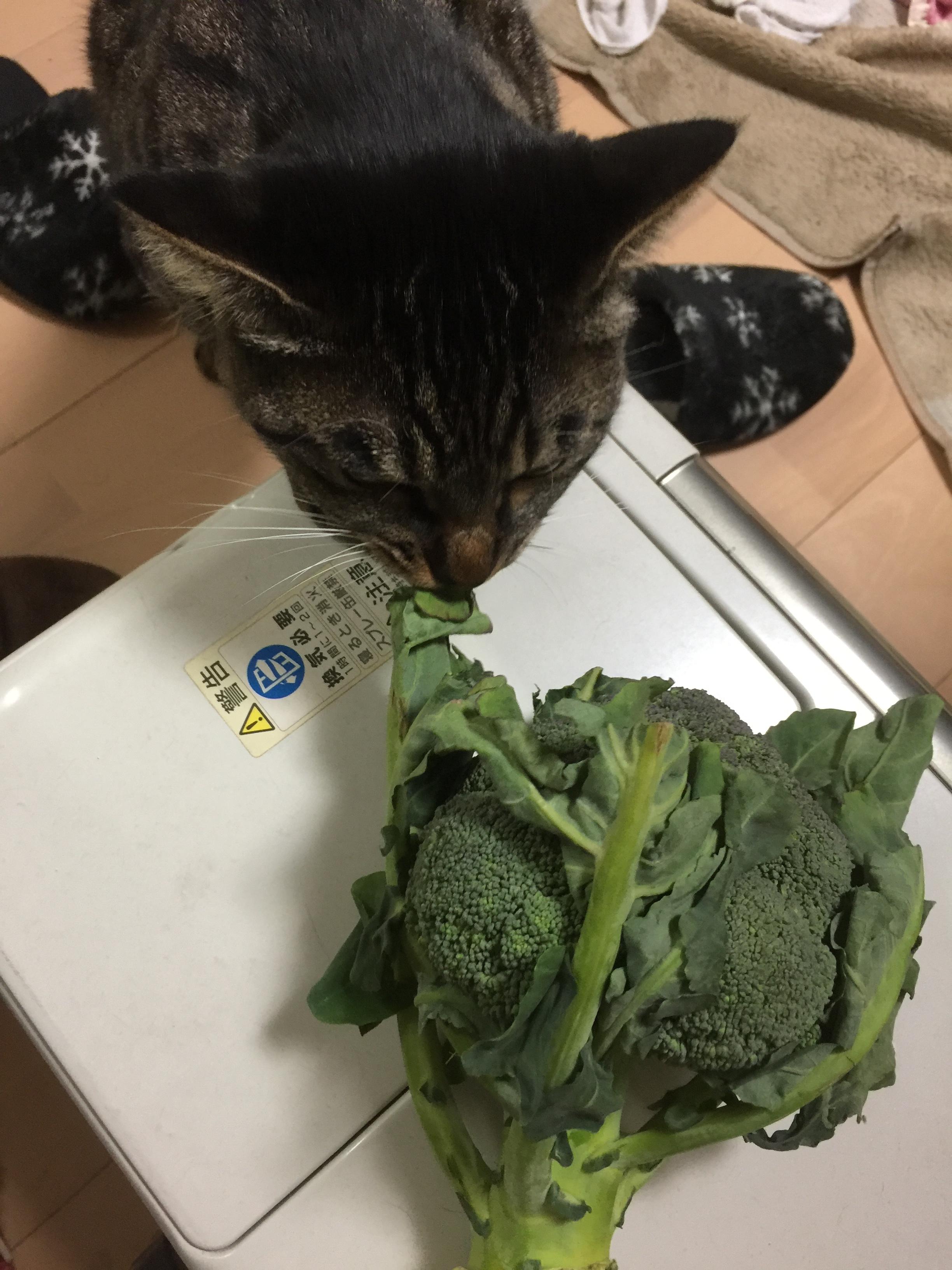 の 葉 大根 猫