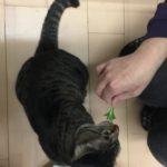 猫は小松菜食べれる。食べていい量や気を付けたい事