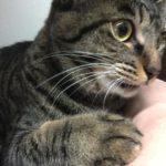 ウチの猫ロミちゃん、とりあえず料理邪魔したり見守ったり噛んでみたり