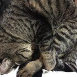 猫は夜行性。ホントなのか?ウソなのか!?飼い猫や家猫の場合は??