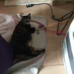 カメラが嫌いなウチの猫。背中に目があるかのように察する