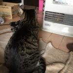 ウチの家猫にとっての大事な物…いつしまうかが問題