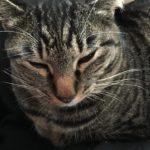 朝から外を気にして確認しに行くウチの猫