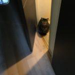朝からことごとく邪魔をするウチのトイレ猫??