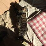 4日連続の夏日でウチの猫は…暑い?それとも
