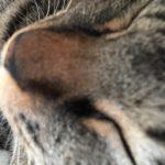 GW中のウチの猫ロミちゃんのおやつ。それは…