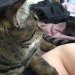 猫の腕枕。暖かくなってくると…それはもはや…