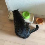 GWも終わって今日から平日。ウチの猫ロミちゃんは今日も日常
