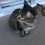 勇気を出して一歩前へ!ウチの猫の勇ましさ、それは50cm…