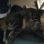気温あがって変わる猫の寝姿。アンモニャイトからダラーん、その先は??