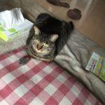 猫も戸惑う気温の乱高下…珍しく香箱座り?と思いきや