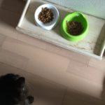 猫も好き嫌い。マズいもんは不味い。ロミちゃんが珍しく食べない…