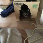 ウチの家猫ロミちゃん。とりあえず入ってみるという選択