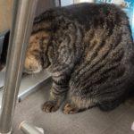 ベランダに虫を見つけて飛び出すウチの猫…お願いだから食べないで!