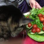 猫が水菜食べた!?危険か心配…猫草の代わり?水菜は食べて大丈夫??