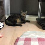 猫は涼しい場所が好き!ウチの猫ロミちゃん夕涼み?