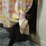ウチの猫ロミちゃんの近況なのだけど…