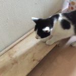 ウチの新しく家族になった猫。名前決定!そして病院へ…