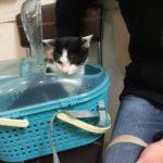 新しく家族になった猫。なるくんを病院に連れて行った話