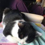 うちの猫が2人に…ロミちゃんとなるくんの日常