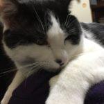 ウチの猫なるくん、去勢手術へ